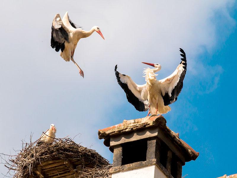 Protection contre la chute ou la nidification des oiseaux - Chapeau de cheminée 44 Loire-Atlantique - Ouest Ramonage